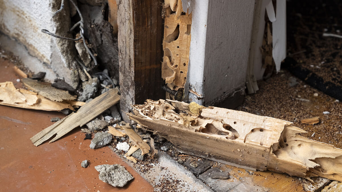 house with termite damage